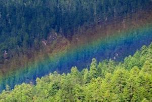 ブータン森の虹.JPG